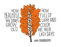 """How beautiful the leaves grow old... How full of light and color are their last days."" John Burroughs"