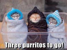 Cute kittens funny joke pic. For more hilarious jokes and pics visit www.bestfunnyjokes4u.com/