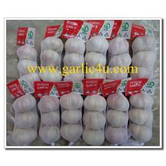 Sizes: 4.5 – 5.0cm, 5.0 – 5.5cm, 5.5 – 6.0cm, 6.0 – 6.5cm, 6.5cm and up Transporting and storing temperature: -3° – 0°C Supply period: all the year round a) Fresh garlic: early June to September b) Cold storing garlic: September to the next May Chinese Garlic, How To Store Garlic, Fresh Garlic, Period, September, Cold, Bags, Handbags, Bag