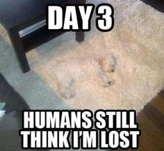 Humans still think I'm lost.