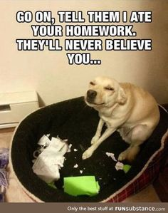 They'll Never Believe You // funny pictures - funny photos - funny images - funny pics - funny quotes - Share with your friends. Funny Animal Jokes, Stupid Funny Memes, Cute Funny Animals, You Funny, Really Funny, Funny Cute, Funny Dogs, Funniest Memes, Super Funny