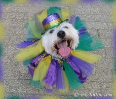 What do you get when you combine thousands of dog lovers and over 500 dogs with the spirit of Mardi Gras? The Krewe of Barkus & Meoux annual pet parade.