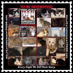 """TO BE DESTROYED 10/16/16 - - Info  Please share View tonight's list here: http://nyccats.urgentpodr.org/tbd-cats-page/  The shelter closes at 8pm. Go to the ACC website( http:/www.nycacc.org/PublicAtRisk.htm) ASAP to adopt a PUBLIC LIST cat (noted with a """"P"""" on their profile) and/or … CLICK HERE FOR ADDITIONAL INF...-  Click for info & Current Status: http://nyccats.urgentpodr.org/to-be-destroyed-091716/"""