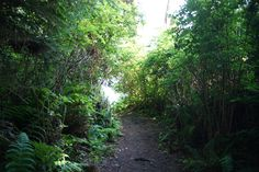 trail to the bay