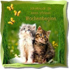 Die 104 Besten Bilder Von Katzen Cats Good Morning Und Animal