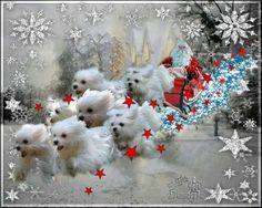 Santa & Maltese Reindeer❤️From my friend Helen❤️