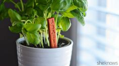 DIY plant markers for your spring garden
