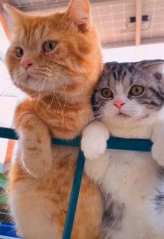 Gifs, Cat Gif, Cute Cats, Cute Animals, Creatures, Minecraft, Hilarious Animals, Pictures, Funny Animals
