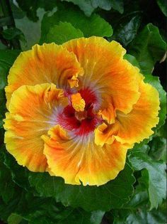Yellow flowers, send flowers online, online flower delivery.