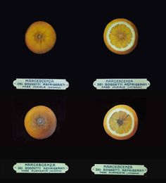 How oranges get damaged inside the fridge  At Museo della Frutta in Turin, Italy, I was excited to see the experiment on refrigeration of oranges in 1930s. On the image above, the first line is the beginning stage of orange in the fridge and the second line is the later stage.  Oranges are tropical fruits, which means they didn't develop themselves to stay in a cold surrounding. So if they stay in the fridge, they easily get damaged. Humanizing them, they get a cold and sick. From my e...