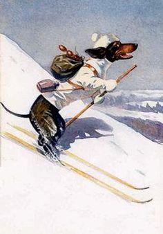 ♥ doxie downhill skier