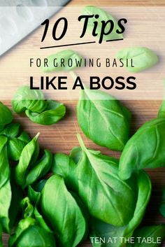 We see summer salads in your future: 10 Tips For Growing Basil Like A Boss