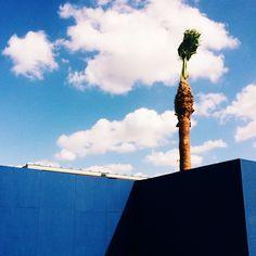 #blue #palm #shadow photo by happymundane on Instagram