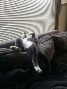 Now that\'s my kinda cat! Lol living the life❤
