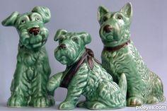 sylvaC dogs