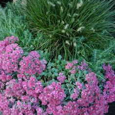 Fall Container Garden Ideas: Sedum, with Rosemary and Fiber Optic Grass Container Garden