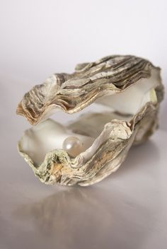 Oyster with Pearl by Max Garcia - art photographer, via Flickr