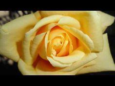 simple mente son flores bellas ojala que les agraden tanto como ami#1
