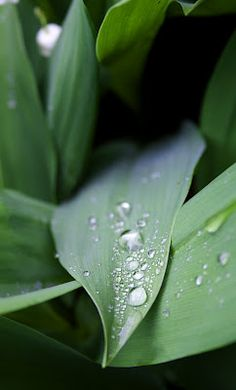 Morning Dew by Hayley Beth Photography
