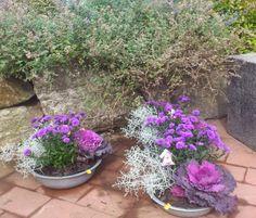 6 Herbst Pflanzen, die für ein grandioses Farbspiel im Garten und in Blumenkästen sorgen