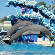 Picture made for me in SeaWorld