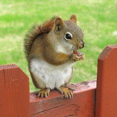 Top 30 cute pics of Squirrel