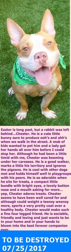 SAFE 7-25-2017 by For the Love of Dog - Rottweiler Rescue of New Hampshire ---  Manhattan Center  My name is CHESTER. My Animal ID # is A1118838. I am a neutered male brown pit bull mix. The shelter thinks I am about 3 YEARS old.  I came in the shelter as a OWNER SUR on 07/24/2017 from OUT OF NYC, owner surrender reason stated was PETS CONFL.  http://nycdogs.urgentpodr.org/chester-a1118838/