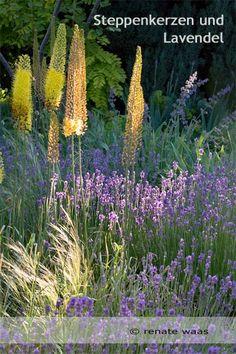 Inselbeet Anlegen Und Gestalten | Beets Ein Hubsches Blumenbeet Planen
