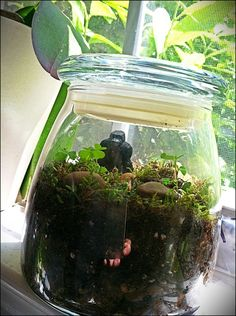 MAKE A RAINFOREST IN A JAR.  With step-by-step pictures and instructions.  Fun project for kids!
