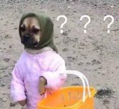Funny Animal Jokes, Funny Dog Memes, Cute Memes, Really Funny Memes, Cute Funny Animals, Stupid Funny Memes, Funny Dogs, Cartoon Memes, Baby Animals Pictures