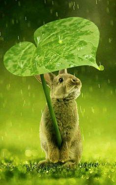Leaf Umbrella for the Rabbit