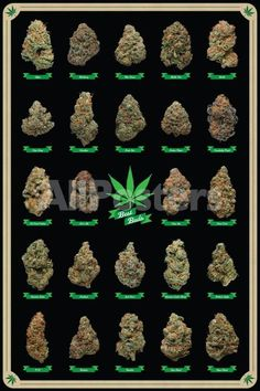 Cannabis Shop, Cannabis Edibles, Weed Posters, Cbd Oil For Sale, Marijuana Plants, Best Bud, Poster Prints, Tutorials, Medicinal Plants