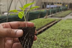 The best guide help you increasing root growth.