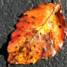 Leaf on the ground after the rain. Beautiful color and texture.
