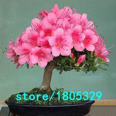 azalea bonsai - Buscar con Google