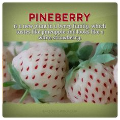 Pineberry - Just ordered my seeds. So excited to grow these!