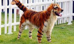 ネコもイヌもハロウィンを楽しんじゃう! かわいらしいペットのハロウィンコスチューム【画像集】