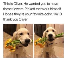 Thank you Oliver, yellow is my favorite color! Cute Funny Animals, Cute Baby Animals, Animals And Pets, Nature Animals, Wild Animals, Cute Puppies, Cute Dogs, Funny Dogs, Cute Babies