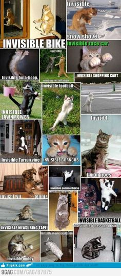 ROFL!  Invisible Cat Collection