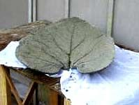 cured leaf removed from mold