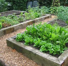 Google Image Result for http://www.gardendesignpicture.co.uk/wp-content/uploads/2012/07/Kitchen-Garden-Design2.jpg