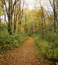 Who says you can't hike in (or at least near) Chicago. Here are the best nearby hiking trails.