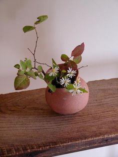 Arrangements Ikebana, Ikebana Flower Arrangement, Floral Arrangements, Flowers Nature, Beautiful Flowers, Bonsai, Arreglos Ikebana, Ikebana Sogetsu, Traditional Japanese Art