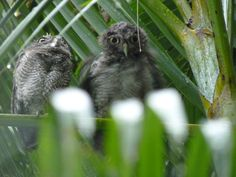 Wet Owls sometimes are not happy!