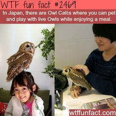 Japan's Owl Cafes - WTF fun facts, aww I want to go there! Wtf Fun Facts, Funny Facts, Random Facts, Random Stuff, Vacation Places, Places To Travel, Vacations, Oh The Places You'll Go, Cool Places To Visit