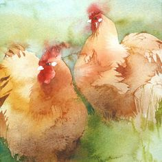 Orpingtons by Kate Osborne - A painting of a pair of the roundest chickens ever bred (probably). A friend keeps this breed in her beautiful garden, and they are as docile as they look Watercolor Pictures, Watercolor Bird, Watercolor Animals, Watercolour Painting, Watercolours, Chicken Painting, Chicken Art, Chicken Shack, Rooster Art