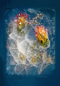 Beautiful Pictures of Frozen Flowers