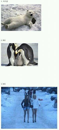 ㅋㅋㅋ 추위에 강한 동물