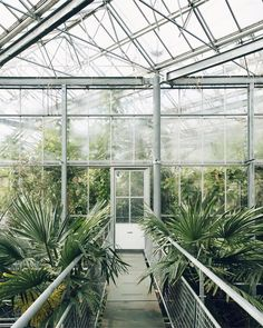 Up and out super early for work this morning. Oh and #greenhousegoals from our trip to @hortusamsterdam #HaarkonGreenhouseTour #HaarkonInAmsterdam