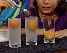 Israel: (Dead Sea) Easy Egg Float Experiment